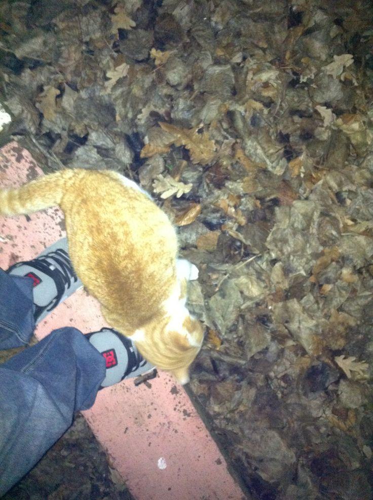 Olimp wild cat :)
