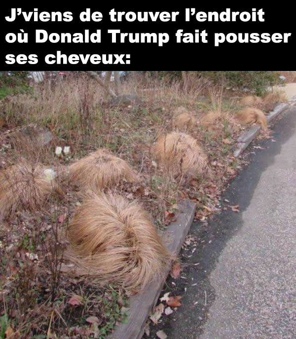 "It says ""I just found the place where Donald Trump grows his hair."" Lol"