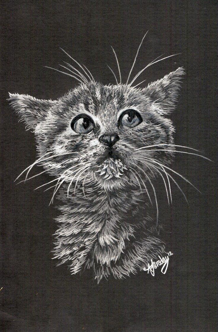 Kitten white pencil crayon