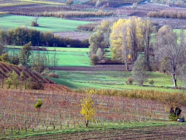Autumn  in  Monferrato  7 by  luigi  rabellino