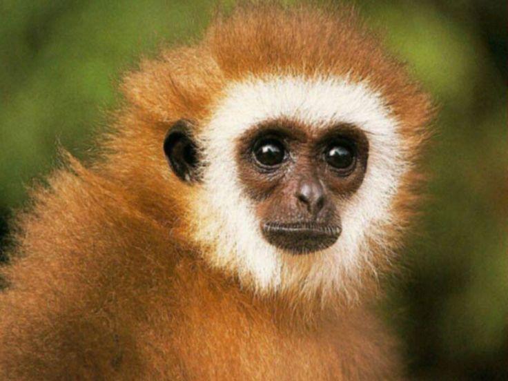 love animals monkey in - photo #30