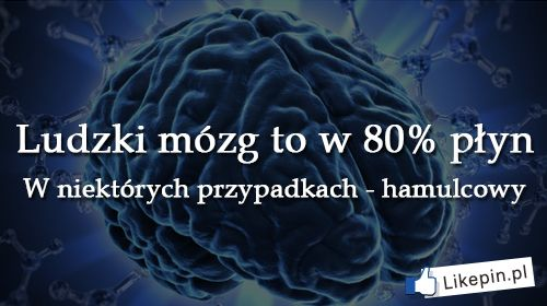 Ludzki mózg to