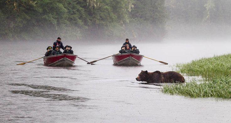 Wildlife Tours | British Columbia | Destination BC - Official Site