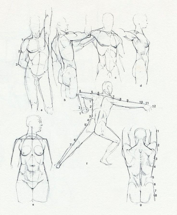 20 best Bammes - Der nackte Mensch images on Pinterest | Anatomy ...