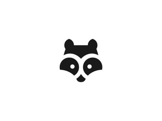 17 Best Raccoons Images On Pinterest Raccoons Racoon