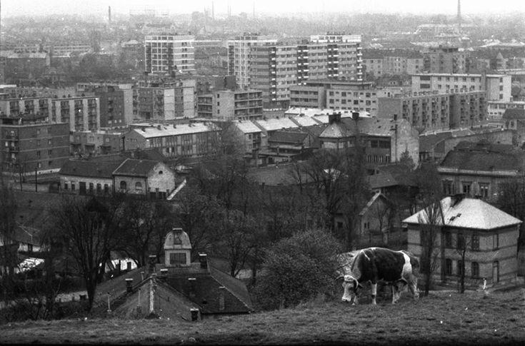 Tehén a város felett, 2000 (Fotó: Chochol Károly / Budapest Galéria)