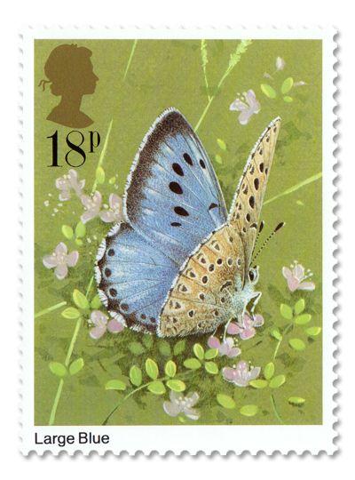 Butterfly:}