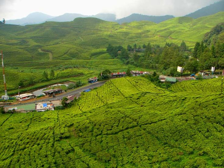 Punchak tea plantations in Indonesia... We went here for long weekends when we live in Jakarta. Take me back :-)