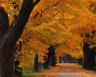 A VOZ DA SELVA AMAZÔNICA: A  CASA  MAL  ASSOMBRADA  XXXIV Caminhei em direção à floresta. Avistei um caminho que ficava no meio dela, dividindo-a em duas partes...