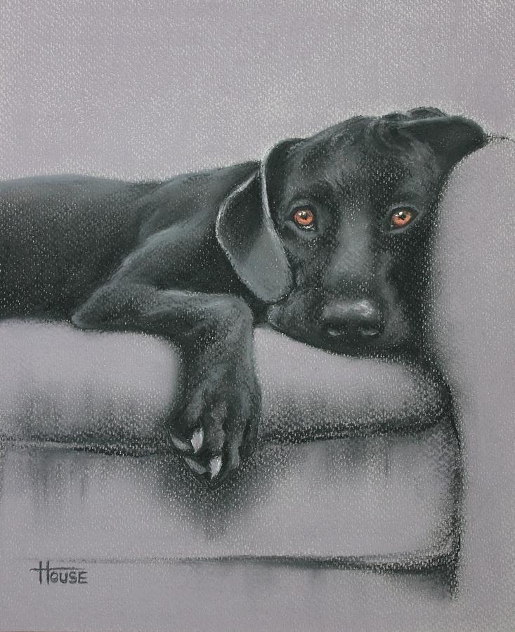 Jasper drawing jasper fine art print selected by drawdogs com artist stephen kline for
