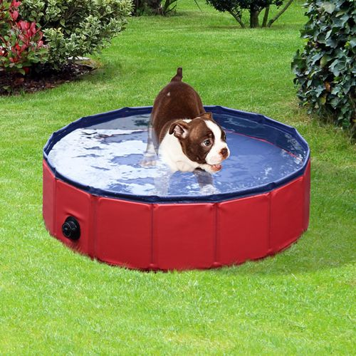 Diy Backyard Ideas For Dogs: Best 25+ Dog Swimming Pools Ideas On Pinterest