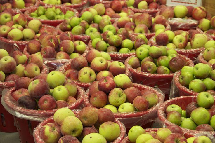 #2 Apples sold by the Half-bushel