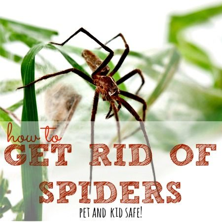 Best 25 Get Rid Of Spiders Ideas On Pinterest  How To Repel Adorable How To Get Rid Of Spiders In Bedroom Decorating Inspiration