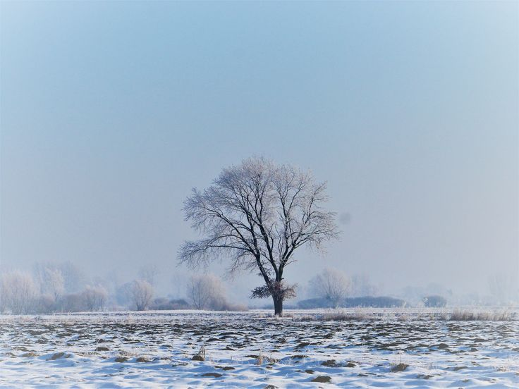 drzewo w zimowym plenerze