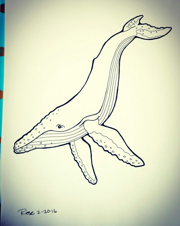 Humpback whale freehand ink drawing my artwork for Ink drawings easy