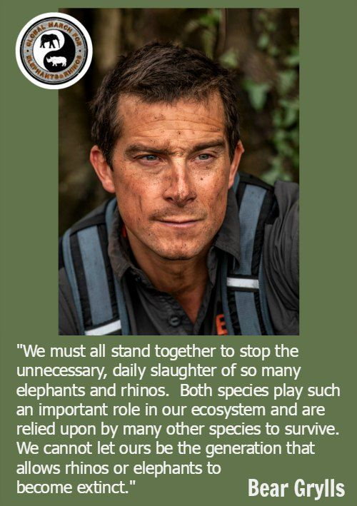 Bear Grylls supports the Global March For Elephants and Rhinos. Please join a march near you. http://actionforelephantsuk.org/ #GMFER2016 http://march4elephantsandrhinos.org/ #Africa #Ivory #RhinoHorn #Wildlife #Conservation #CITES #Cop17 #Extinction #Safari