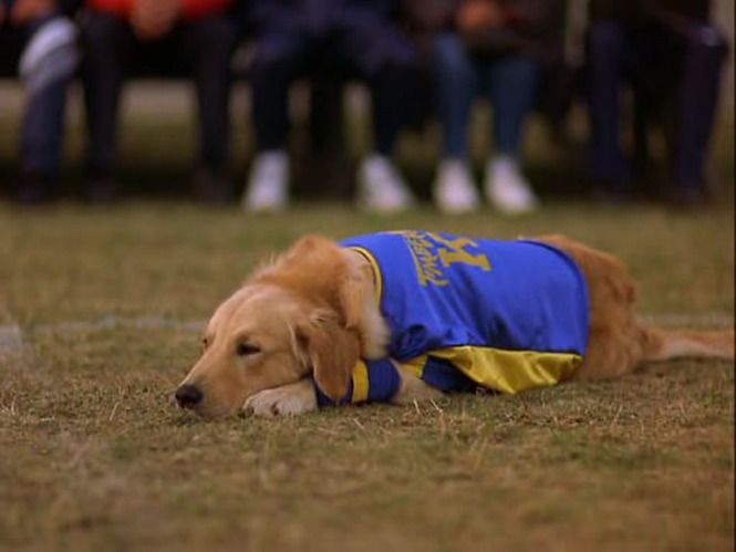Screencap Gallery for Air Bud 3: World Pup (2001) (480p DVD, Air Bud / Buddies, Disney Live-Action). A boy and his dog take on the world of soccer.