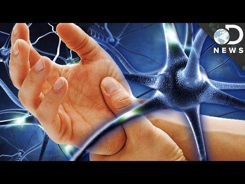 302 Best Neuroplasticity Images On Pinterest