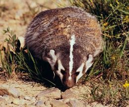 List of and information about animals that hibernate