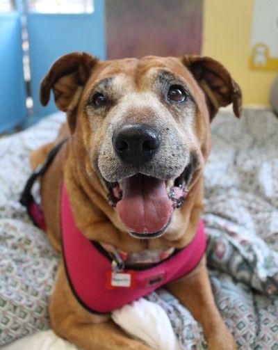 Magnolia 4973 because #seniordogs rule❤️ #adorable #sanfrancisco