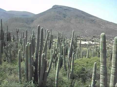 Jard n bot nico reserva de la biosfera zapotitl n salinas for El jardin portugalete