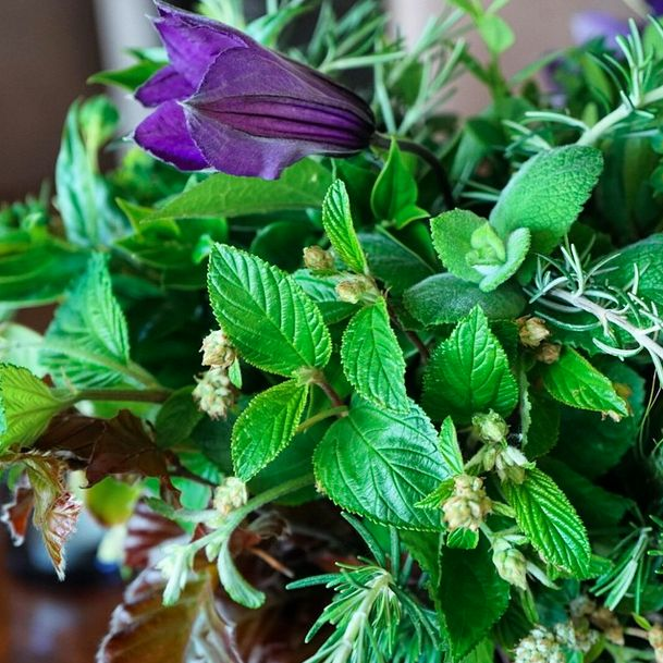 A party table of herbs... Plus a few stunning clematis. #whatshappeningnow #herbs #clematis #russianriverflowerschool #healdsburg