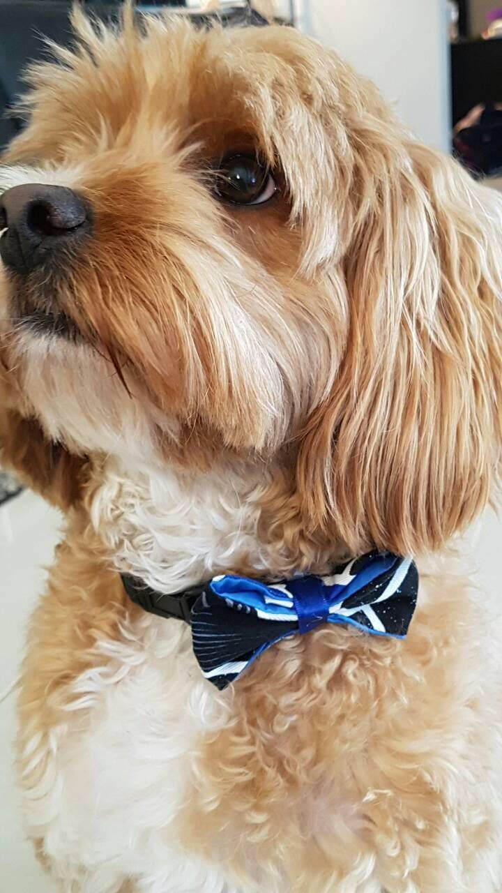 Geeky Bow Ties for your furbabies by BMLgeekgirls on Etsy https://www.etsy.com/au/listing/513099356/geeky-bow-ties-for-your-furbabies