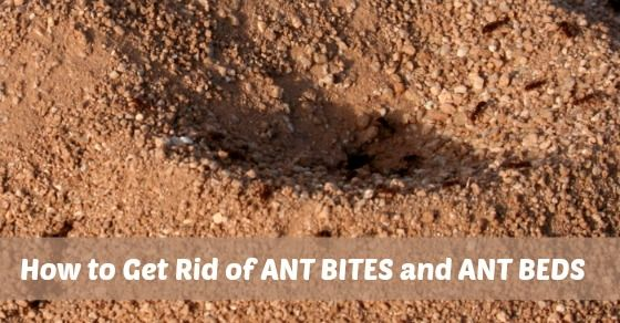 1000 ideas about ant bites on pinterest fire ant bites bee sting and spider bites. Black Bedroom Furniture Sets. Home Design Ideas
