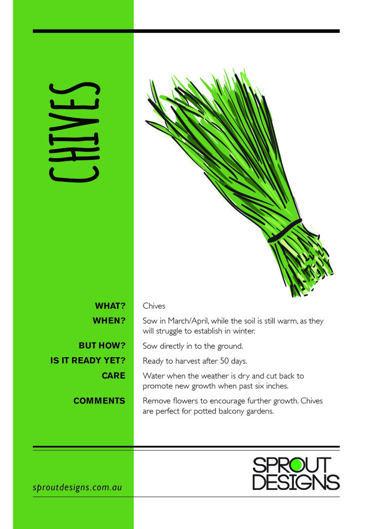 How to grow Chives!