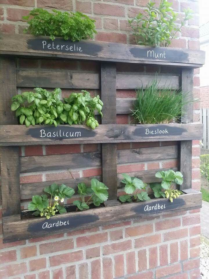 Paleta como jardín de hierbas. # como # Jardín de hierbas # Paleta # Paleta