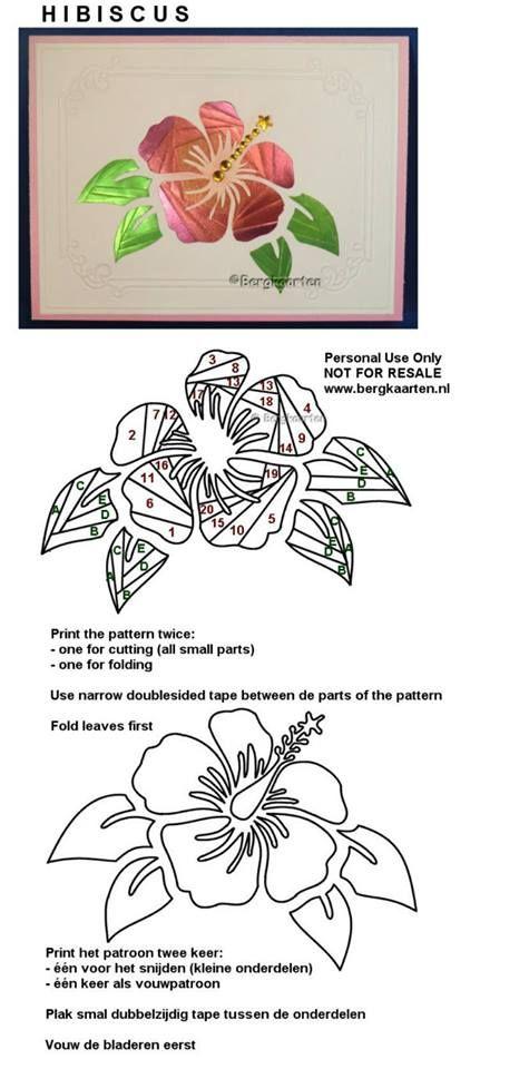 Irisvouwen: Hibiscus