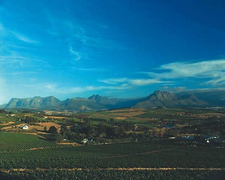 Stellenbosch winelands, South Africa