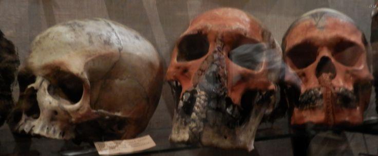 skulls! Pitt Rivers
