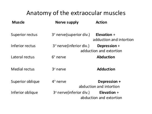 Best Anaesthetics  Anatomy Images On   Anatomy