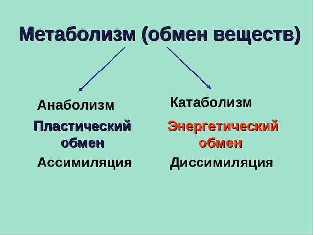 Конспект урока энергетический обмен в backprofin  Конспект урока энергетический обмен в