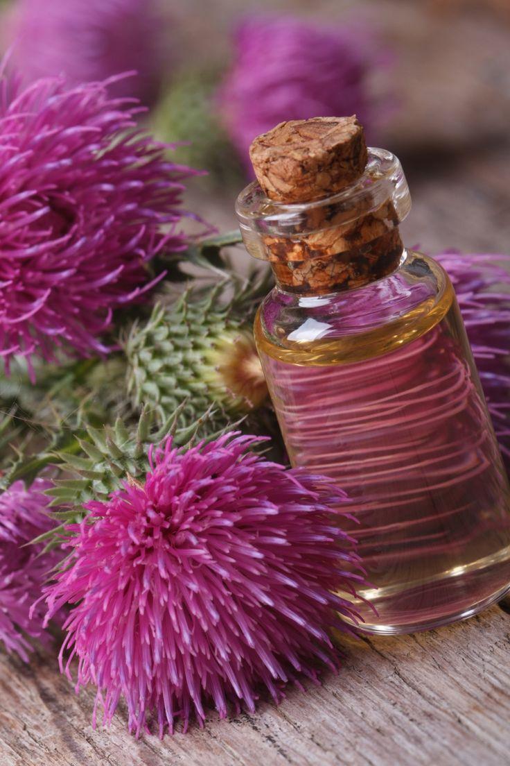 Distelöl bei unreiner Haut - thistle oil for blemished skin