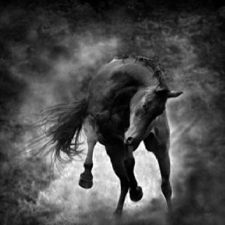 Beautiful Horses, Equine, Beautiful Hors Photography, Amazing Hors, Horse Photography, Horses Photography, Wild Hors, Black Hors, Animal