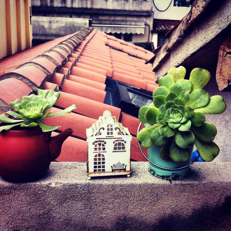 Succulent in my terrace