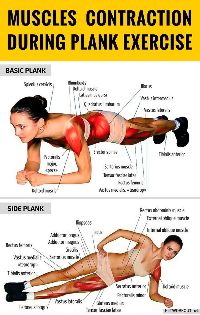 Muscles-Contraction-During-Plank-Exercise.jpg 700×1.100 pixeli