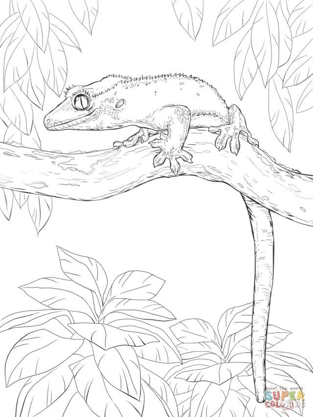 27 Brilliant Image Of Gecko Coloring Page Tree Coloring Page
