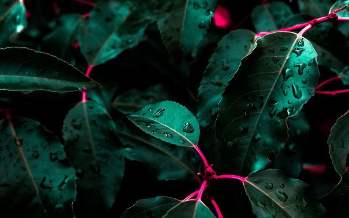 Download wallpapers green leaves, rainforest, bushes, dewdrops, water