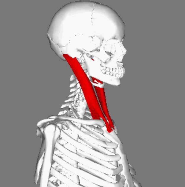 Head rotation anatomy