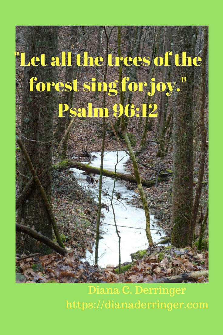 """Let all the trees of the forest sing for joy."" Psalm 96:12"