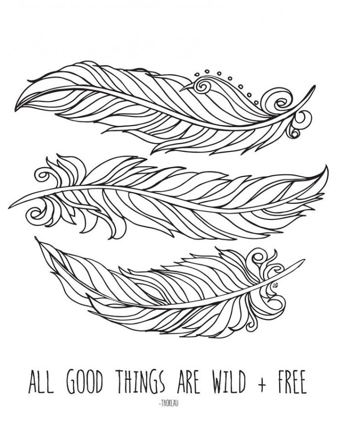 Feather free printable coloring pages for older kids