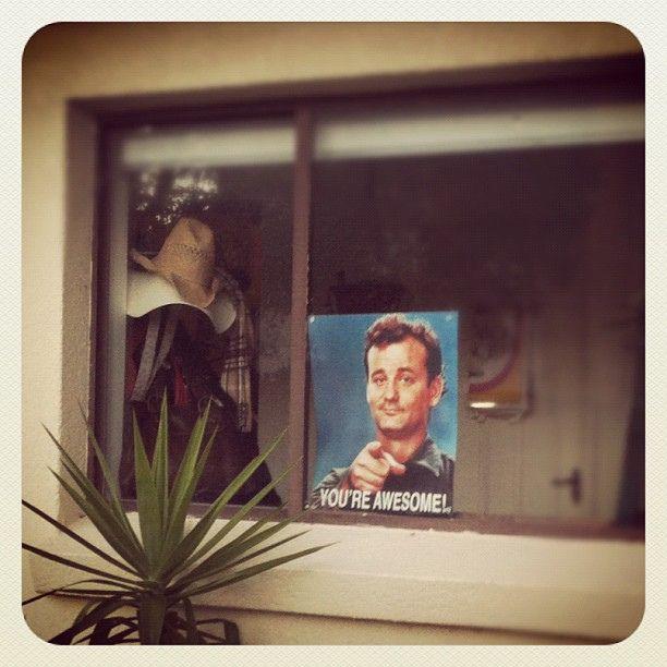 Bondi. You're Awesome! #bondi #atbondi #quirky #sign #poster #BillMurray