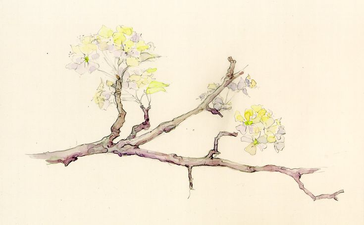tree branch drawings - Google Search