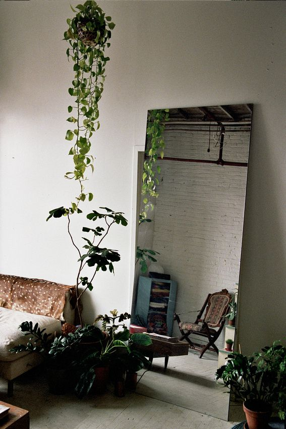 That hanging plant... We have a corner towards the crown moulding of our ceiling that could use the colour it would provide.