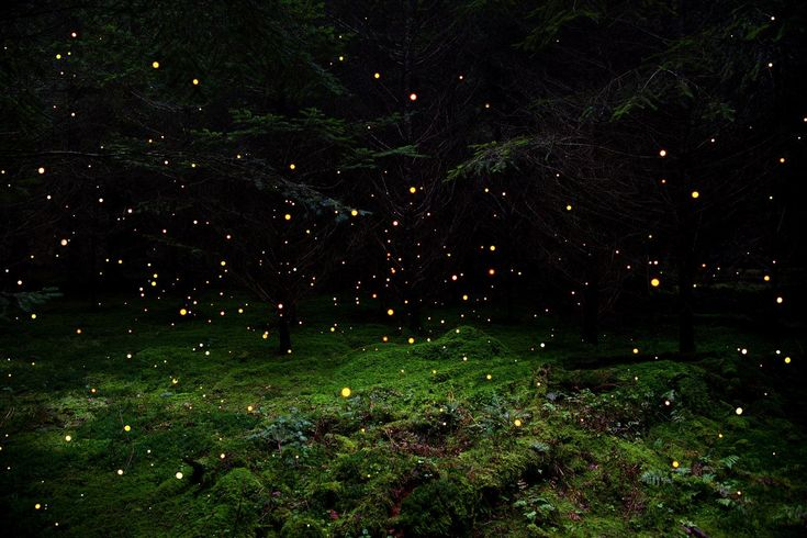 Ellie Davies, born in 1976, grew up in an ancient forest in England – the sort of place where fairy tales, both dark and whimsical, are set. Davies captures the mystery and intrigue of ancient forests by creating minimally disruptive woodland installations that transform the natural into the f…