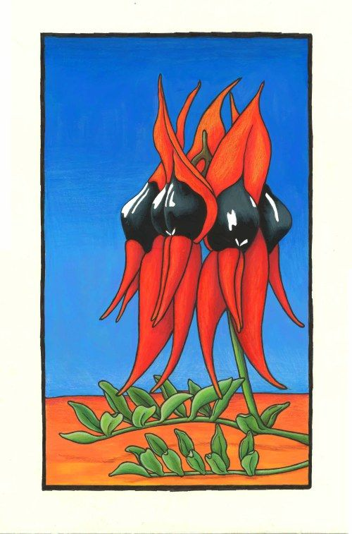 Karen Bailey Sturt Desert Pea 3 Coloured Pencil over acrylic paint. Click back to post to find out more about the drawing. Contact the artist through the blog for information on sales and commissions.