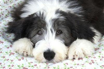 50 Super Cute Puppy Photos!!!